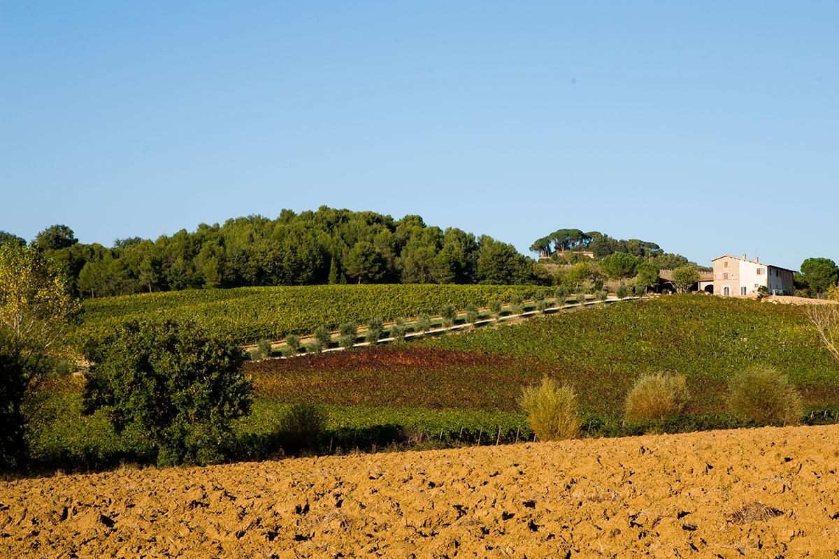 Terre Margaritelli, Miralduolo